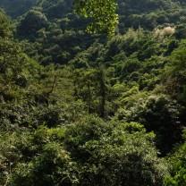 Baiyunzhang Huizhou 231119 (2)